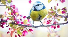 Frühlingsgefühle