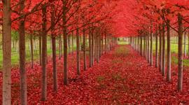 Ein Herbst wird kommen