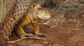 Der Galapagos-Krimi