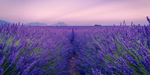 A wonderful night in Provence