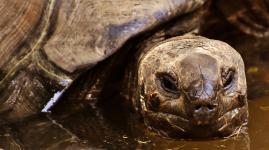Das Geheimnis der Galapagos-Inseln